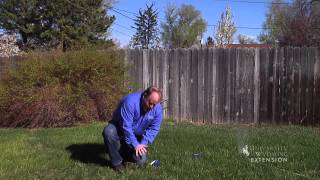 How Much Water and Best Time to Water Lawn