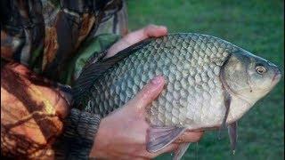 Рыбнадзор.Ловля карасей руками.