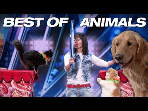 Singing Dogs! Cat Tricks! Animal Noises From A Human! - America's Got Talent 2018 (видео)