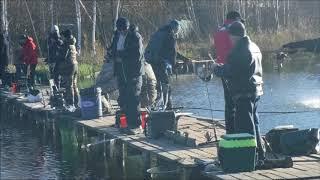 Платная рыбалка фито нн