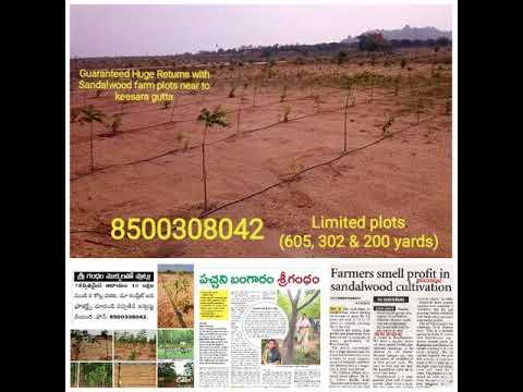 Best sandalwood plantation plots/Farm land plots/hyderabad