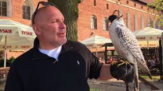 02 - Poland - Malbork Castle - Falcon Encounter