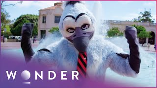 Furries, Devils and A Japanese Apologising Agency | World Of Weird S1EP6