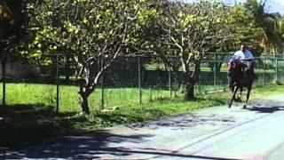 preview picture of video 'El Guerrero de maunabo'