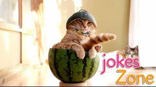 Самые смешные видео недели Август 2016 || Подборка смешных видео Best Jokes №9