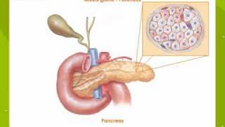 Hormones - Exocrine V. Endocrine Glands