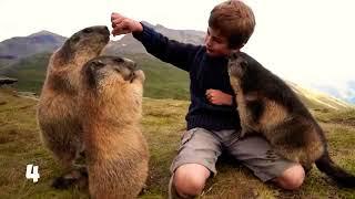 Животные спасшие человека!любителям животных смотреть обязательно!
