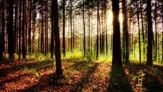 Meditation, Healing Music, Relaxation Music, Chakra, Relaxing Music for Stress Relief, Relax, ☯062