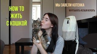 МЫ ЗАВЕЛИ КОШКУ || все, что нужно знать перед тем, как завести котенка