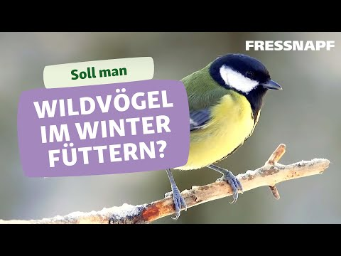 Wildvögel richtig füttern