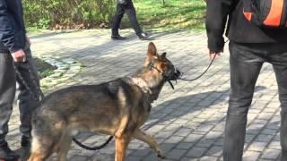 Pies z agresją do ludzi - ocena zachowania