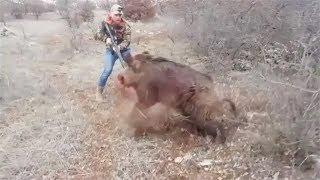 Как поймать дикого кабана без ружья