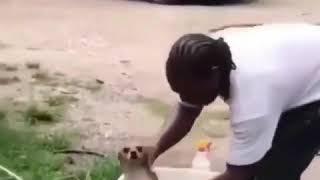Dog Baptism