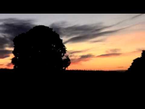 D7000動画、いつものクルミの木