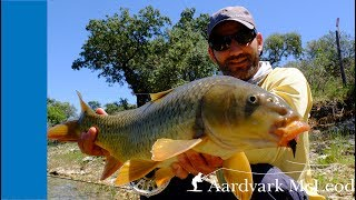 Carp on the fly in Portugal