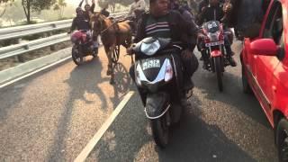 Delhi Horse Racing 10 KM Pari Chowk