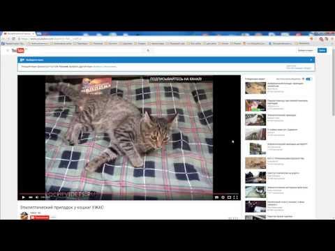 Припадки, эпилепсии у кошек из-за чего бывают? ОТВЕТ НАЙДЕН!!!