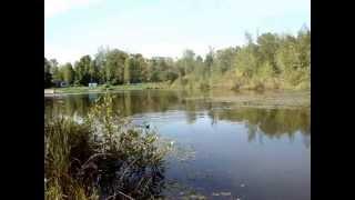 Черное озеро щелковский район рыбалка