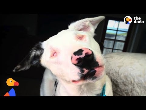 Abandoned Blind and Deaf Puppy Learns To Be a Dog Again With Loving Mom's Help | The Dodo