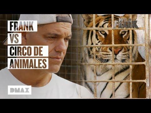 Odvrácená tvář cirkusů se zvířaty