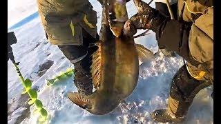 ОЧЕНЬ ЖИРНЫЙ СУДАК НЕ ЛЕЗЕТ В ЛУНКУ ПЕРВЫЙ ЛЁД 2017 2018 ЗИМНЯЯ РЫБАЛКА ЖЕРЛИЦЫ Видео рыбалка зимой