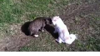 Кот матерится ругается матом дерутся прикол матюки
