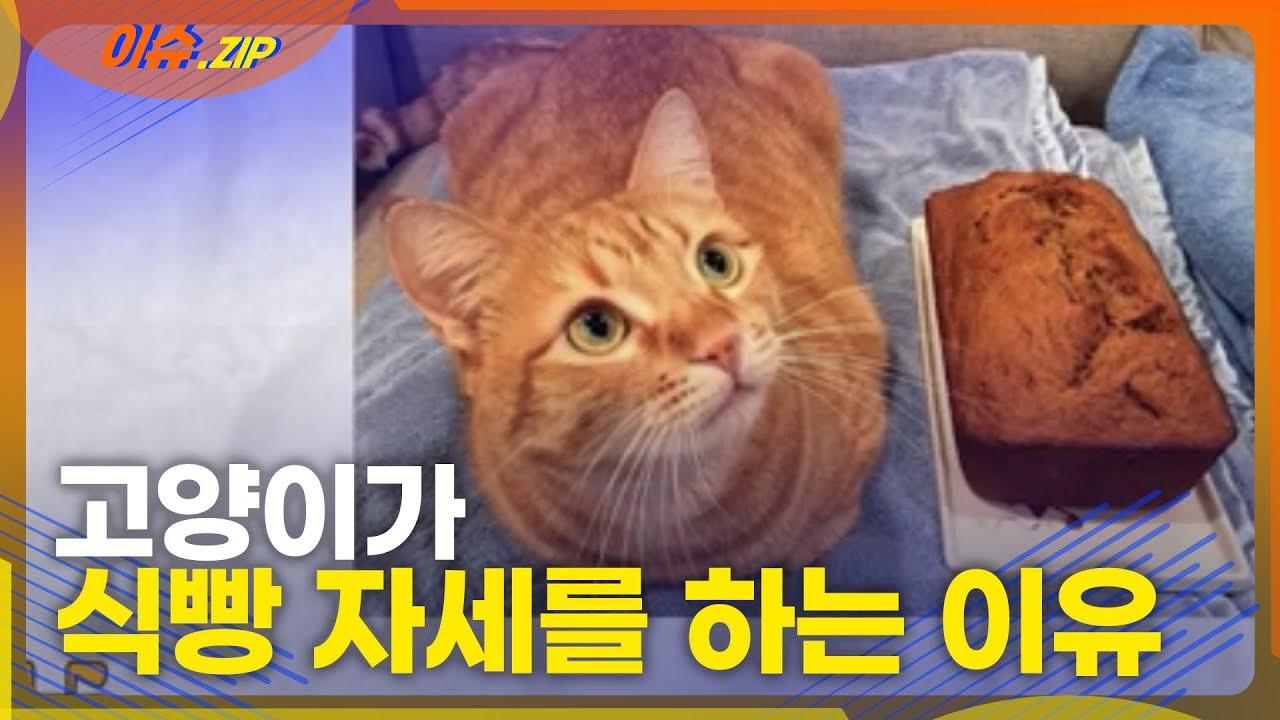 고양이는 왜 식빵을 구울까?