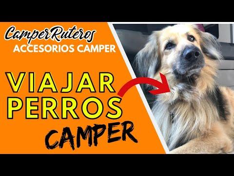 8 accesorios útiles para viajar con perros | 2016 | Camper, Autocaravana o Camping