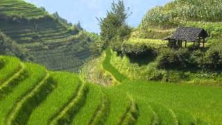 preview picture of video 'Longsheng rice terraces'
