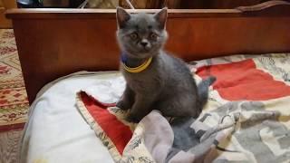 Котята. Котики.  Милые котята)))) Приколы с котами и котятами. Супер красота.