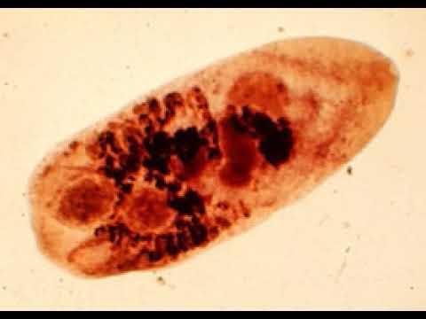 Parazita férgek gyógyszerek