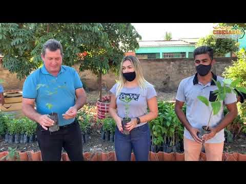 Consórcio Cidesasul realiza entrega de mudas frutíferas e nativas em São Pedro da Cipa
