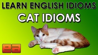 Cat Idioms - Learn English Idioms - Animal Idioms - 4 - EnglishAnyone.com