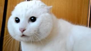 Кот кричит на голову куклы (испуганный кот) scared cat (кошка орет)