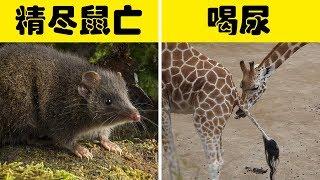 5個動物奇怪的交配方式,看看都有哪些騷操作