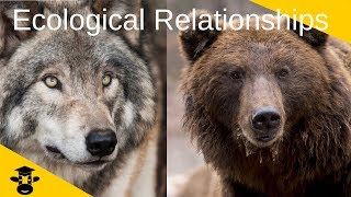 Ecological Relationships-Competition- Predator And Prey- Symbiosis