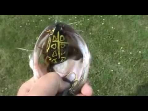 July 4th pond fishing!!!