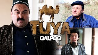 Qalpoq - Tuya   Калпок - Туя (hajviy ko