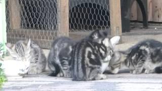 Katze Mimi - Mimis Babys geht es gut