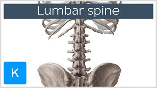 Lumbar Spine Anatomy and Function - Human Anatomy | Kenhub