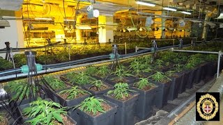 preview picture of video 'La Policia Local de Blanes decomissa 2.101 plantes de marihuana en un magatzem'