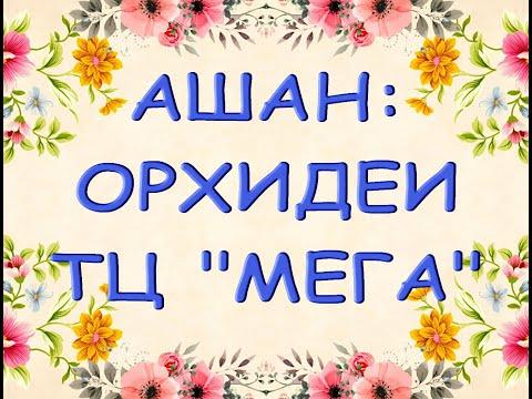 """ОРХИДЕИ в АШАНЕ ТЦ """"Мега"""",13.09.21,Самара."""