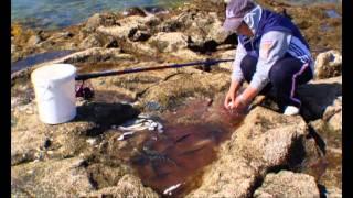 Destrucción masiva e irreversible del mar