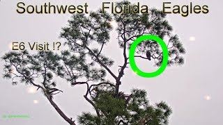 SWFL Eagles. ~ November, 17 ~ E6 Visits Mom! Still Longing For His Dad, Ozzie...