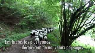 preview picture of video 'Transhumance des brebis à Larrau 2012 (deuxième partie)'