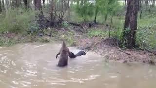 #122 Подборка видео с животными / #122 Best animals video compilation