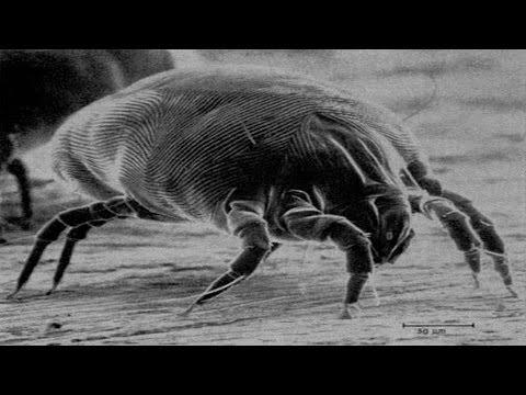 Kapag pumasa ubo matapos worm