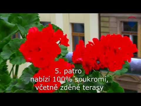 Video Prodej bytu 1+1 v osobním vlastnictví 44 m², Praha 2 - Vinohrady