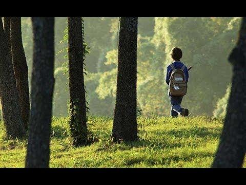 За плохое поведение родители оставили ребенка одного в лесу. Вот что произошло с мальчиком!