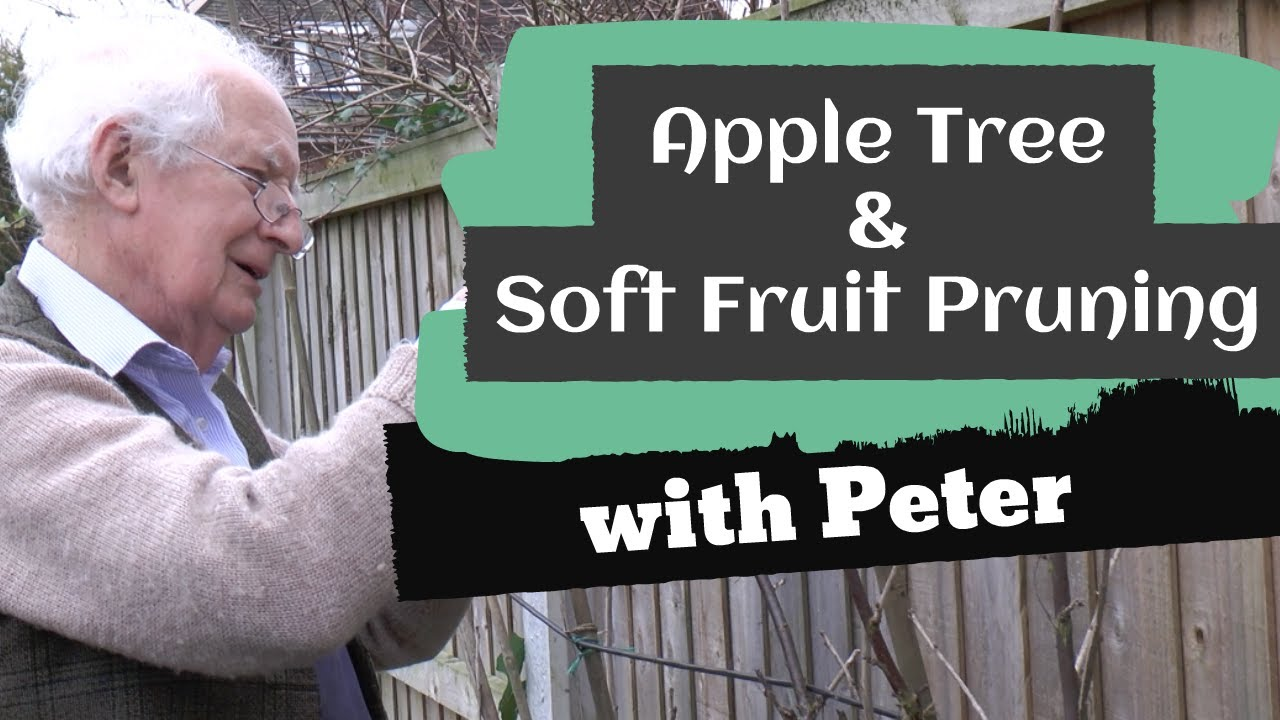 Apple Tree & Soft Fruit Pruning
